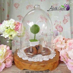 round teak tray dome